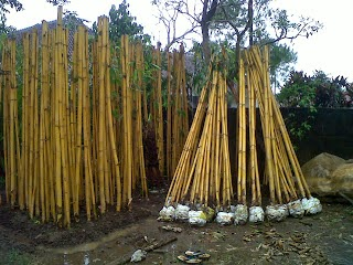 http://tukangtamankaryaalam.blogspot.com/2014/11/tanaman-pagar-hidup-bambu-jepang-pohon.html