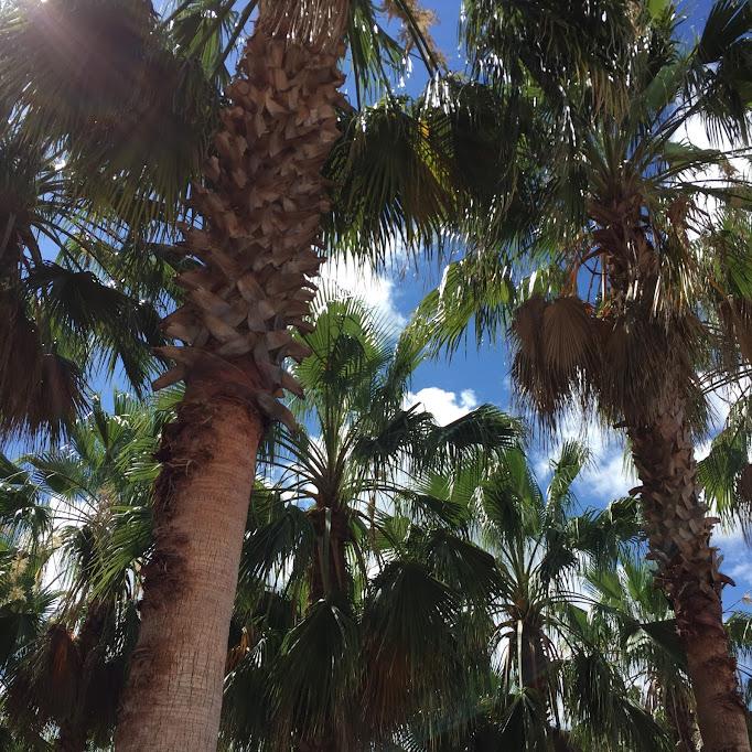 palm trees on palm trees