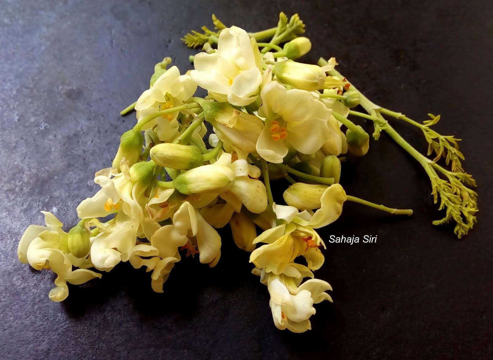 Sahaja Siri Moringa Leaves Flower Tambuli Drumstick Flower Leaves Tambuli