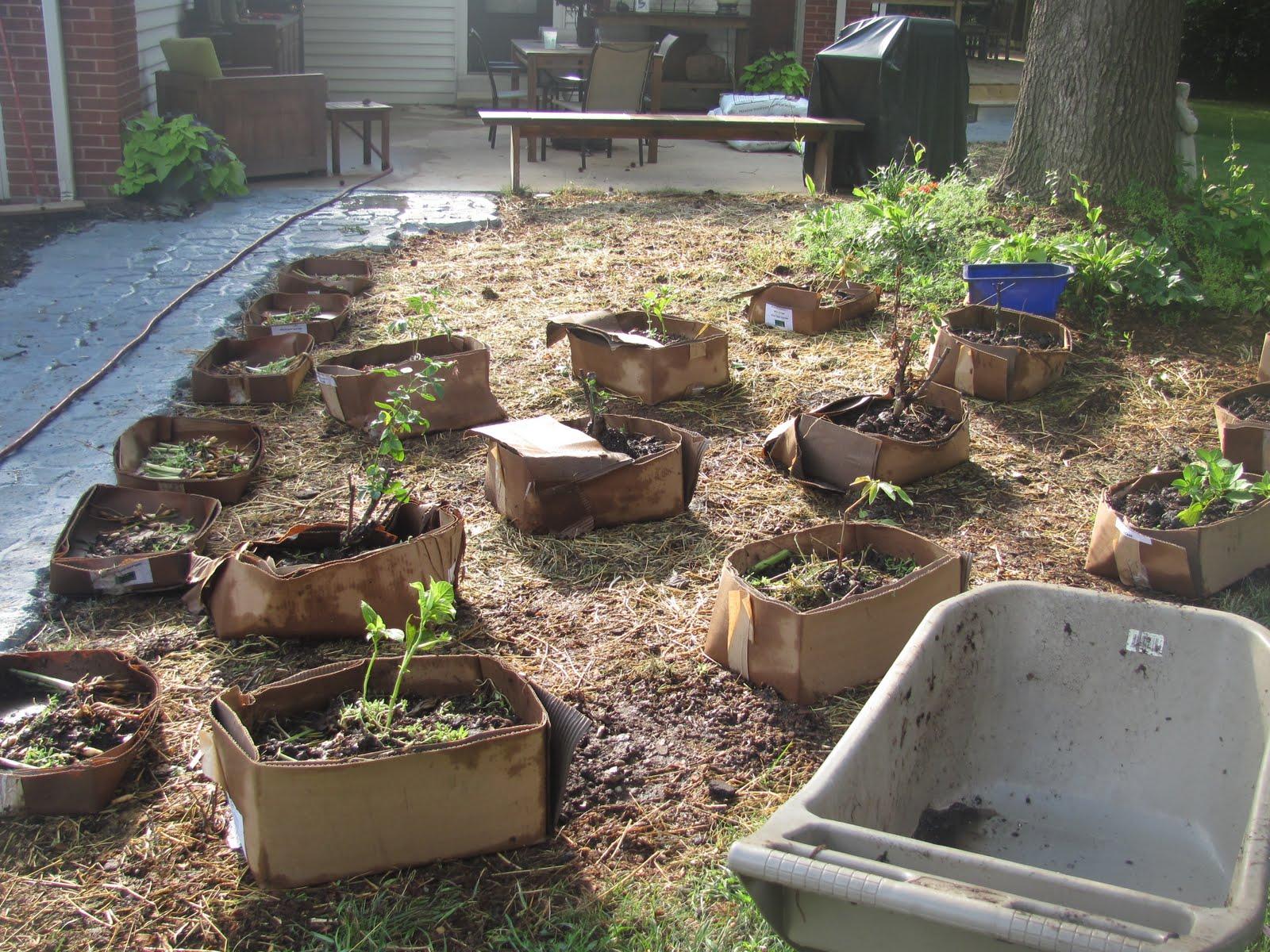 Cardboard Box Vegetable Garden