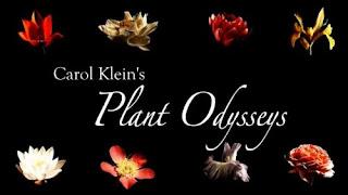 Carol Klein's Plant Odysseys - Roses ep.1