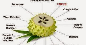 Suvarna Prashan Cancer Cure By Soursop Graviola