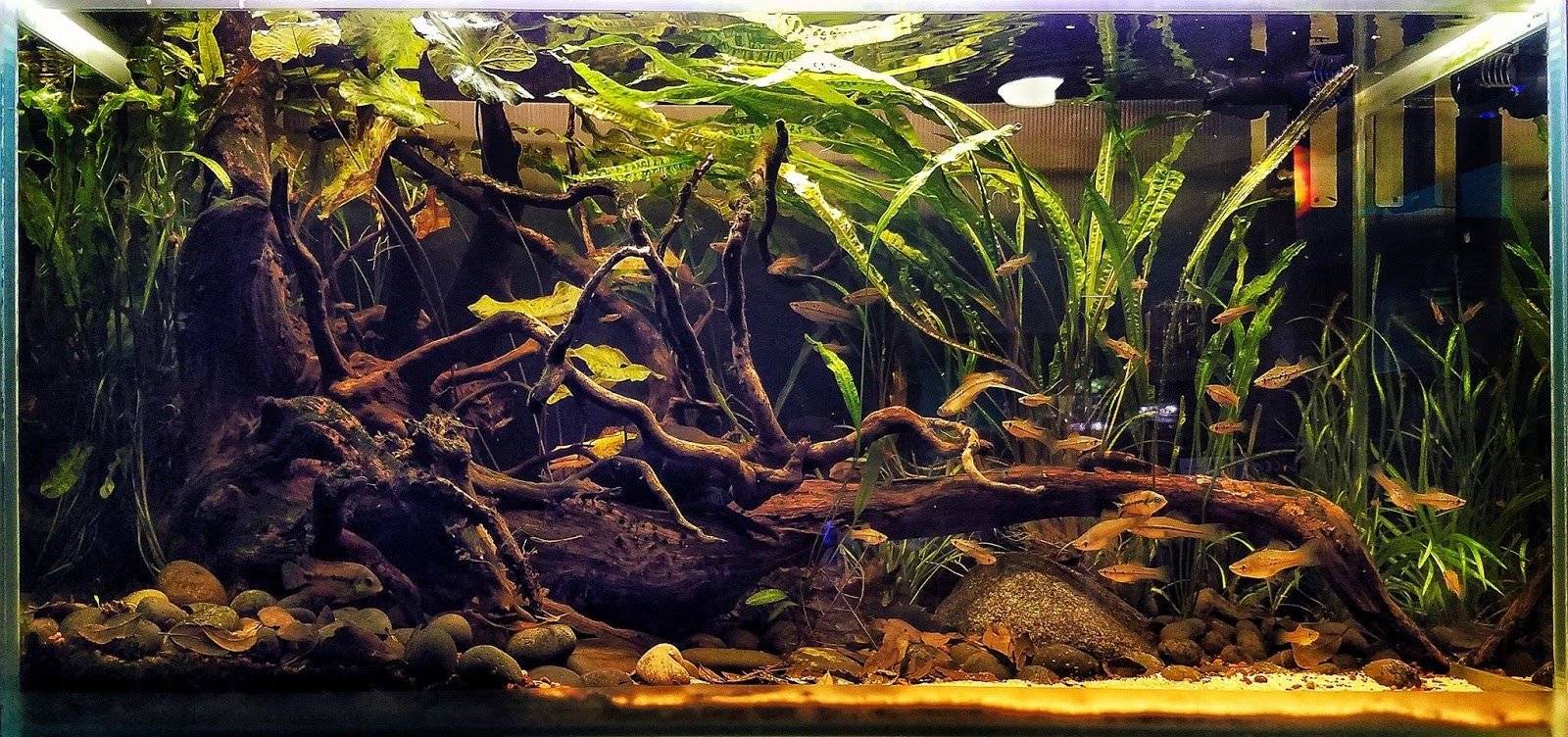 The biotope aquarium and the biotope style aquascaping