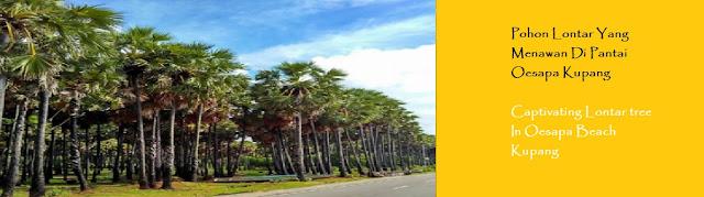 http://ketutrudi.blogspot.co.id/2018/02/pohon-lontar-yang-menawan-di-pantai.html