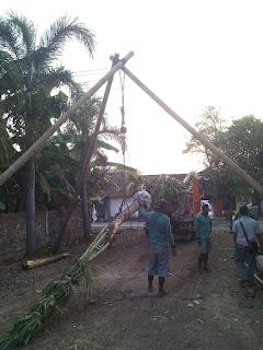 Pohon Kelapa Genjah Cabut Agro Potensi