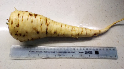Fresh parsnip from the 80 Minute Allotment Green FIngered Blog