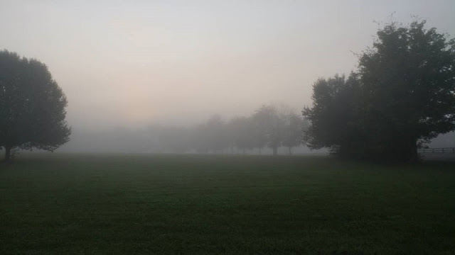 our land foggy morning #nature #WordlessWednesday