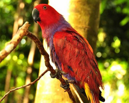 Tinuku.com Travel Aketajawe-Lolobata National Park on Halmahera island, watching the beautiful birds and most rarest in the world