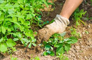 Grass Killer For Vegetable Gardens
