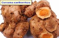 Cancer liver medicine herbs