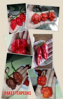 2 Manfaat Tanaman Lombok Warna Warni