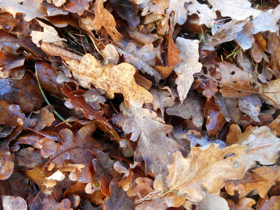 Foglie in autunno