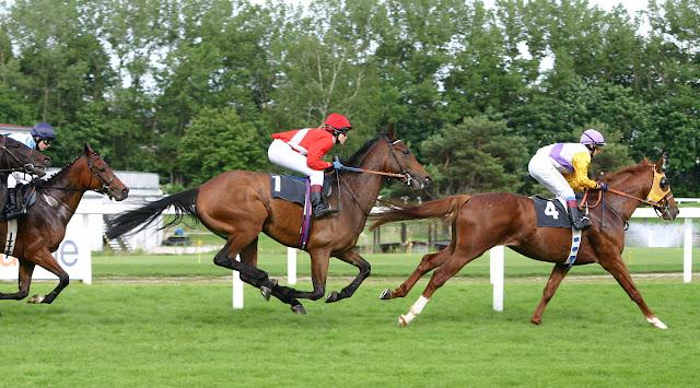 Photos montrant des chevaux en pleine course