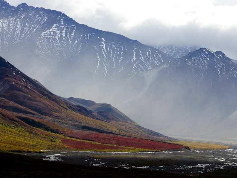 Tundra Biome Definition