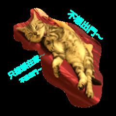 Debby cat.