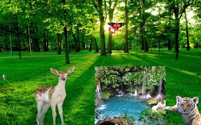 introducción Naturaleza