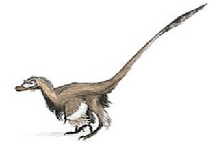 Velociraptor Türü