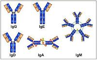 Immunology MCQ