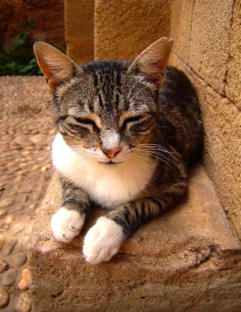 Koty w Maroko. Rabat