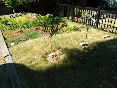 Mount Pleasant West front garden renovation before by Paul Jung Gardening Services Toronto