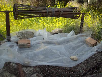 Καλλιεργώ μανιτάρια πλευρώτους