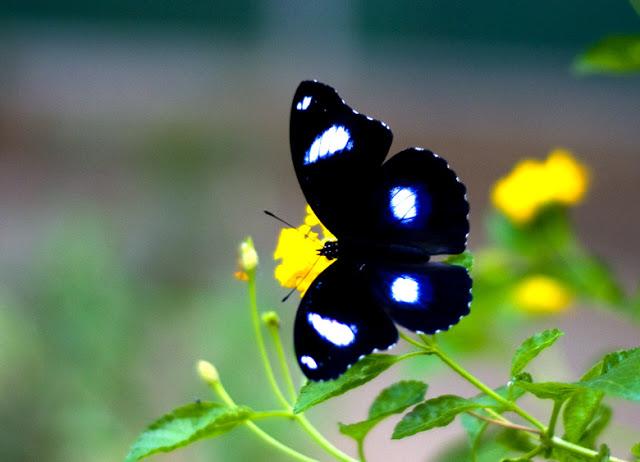 Cute Aishwarya Rai Wallpapers Butterfly Wallpaper 3d Wallpaper Nature Wallpaper