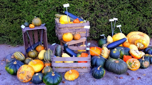 Pumpkins, squash, and eggplant at Gamla Orangeriet in Stockholm on a feathery*nest  |  http://afeatherynest.com