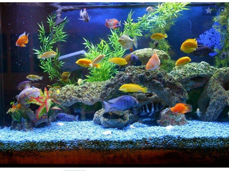 Galery aquascape Dan Ikan