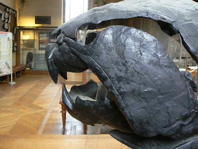Cabeza de Dunkleosteus