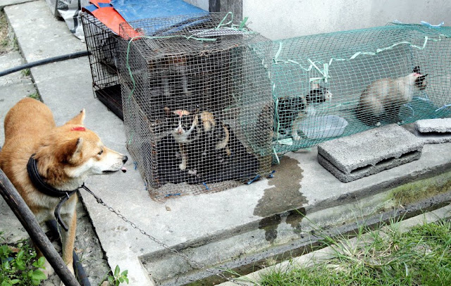 Pesakit Kelima Jangkitan Rabies Dikesan Di Serian