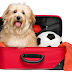 What You Can Do To Traveling Along With Pets