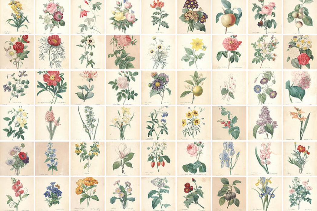 botanical from   The Biodiversity Heritage Library (BHL)
