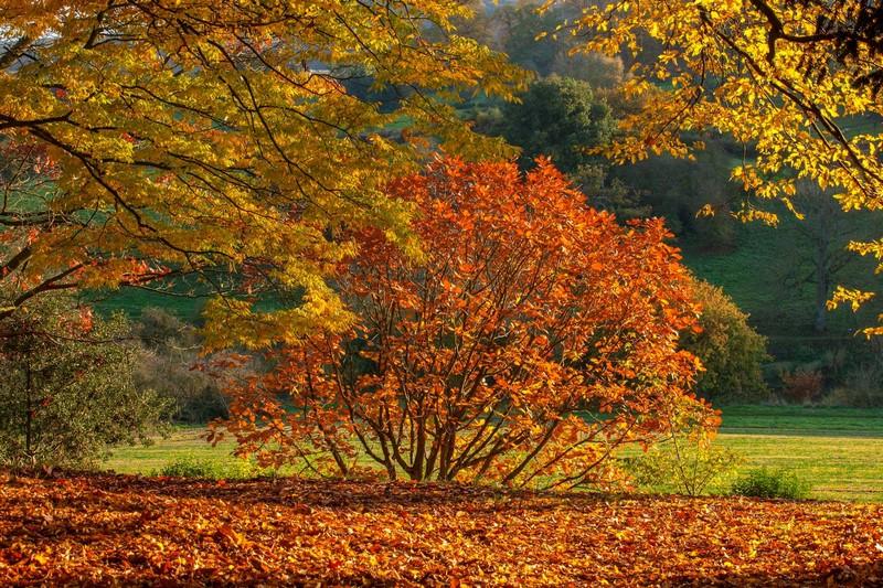 Arley Arboretum, Worcestershire, UK