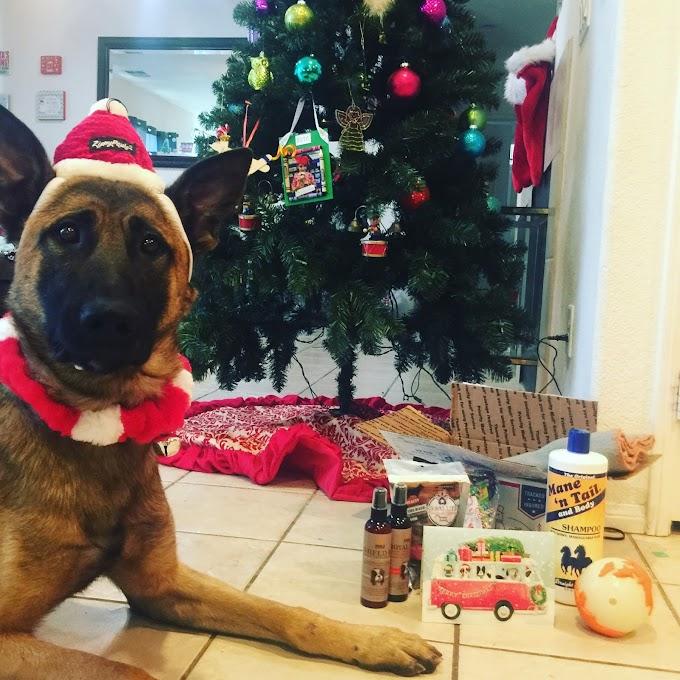 Christmas Care Pack for K9 Officer Zoli