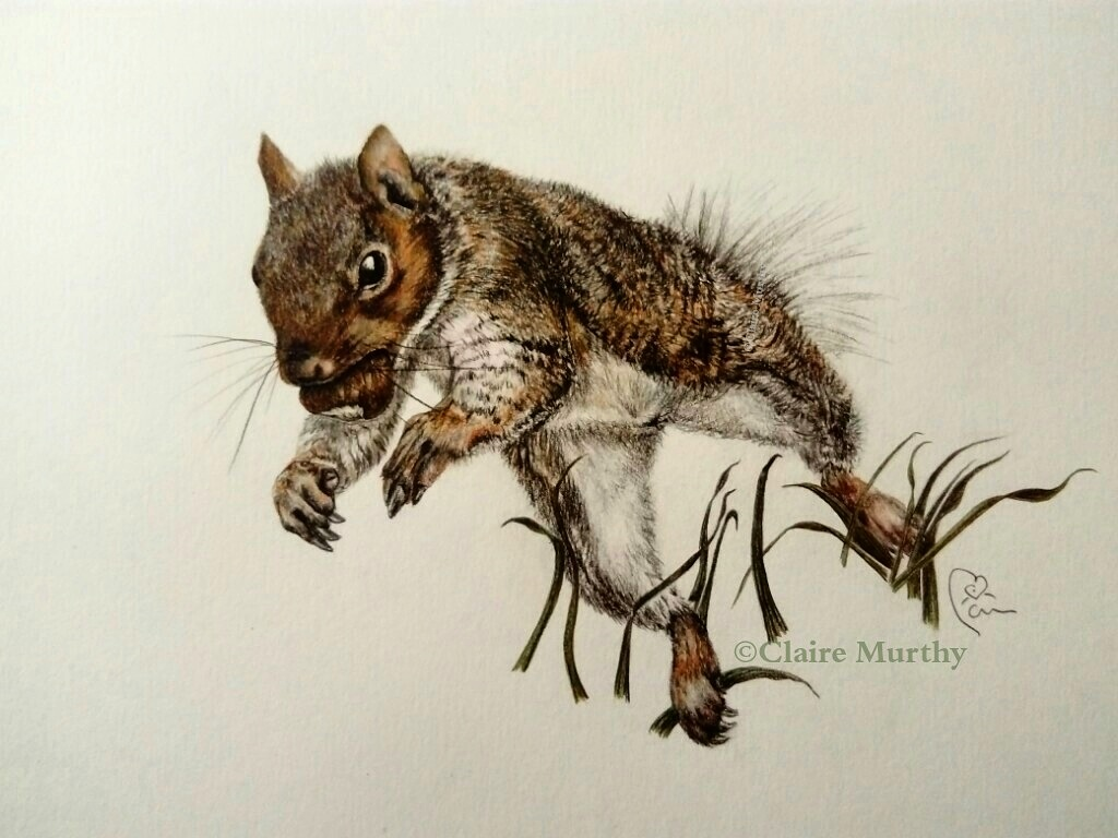 british wildlife art   squirrels