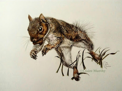 squirrel jumping fine art drawing