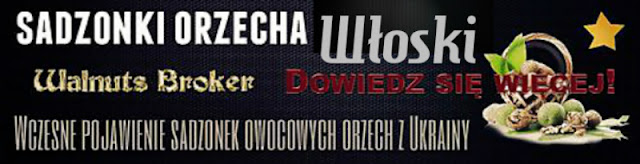 Sadzonki Szybki Orzech Włoski Polska  Walnuts Broker