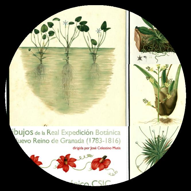 Celestino Mutis. Real Expedición Botánica del Nuevo Reino de Granada