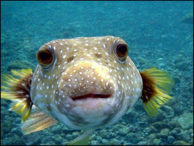 101+ Gambar Gambar Ikan Lucu Terlihat Keren