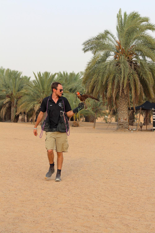 falcon show dubai desert