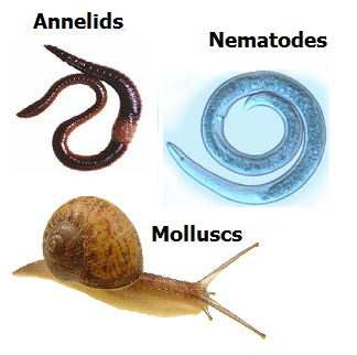 # 7 Other groups of invertebrates | Biology Notes for ...