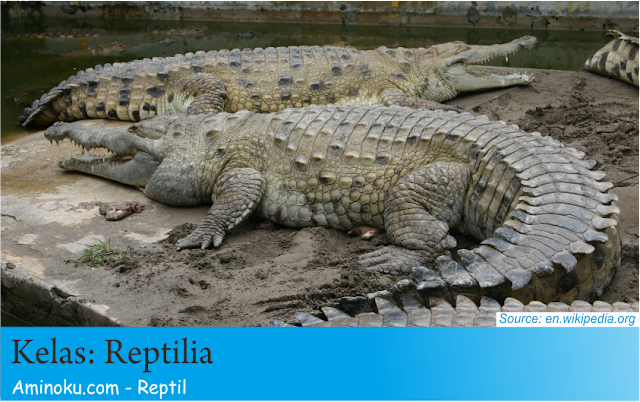 Fakta unik reptil
