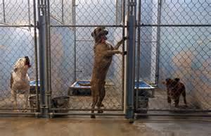 animal shelter essay