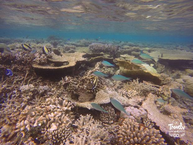donde alojarte en Maldivas arrecife