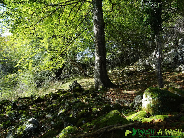 Bosque entre el Sienra y Peña Cebeo