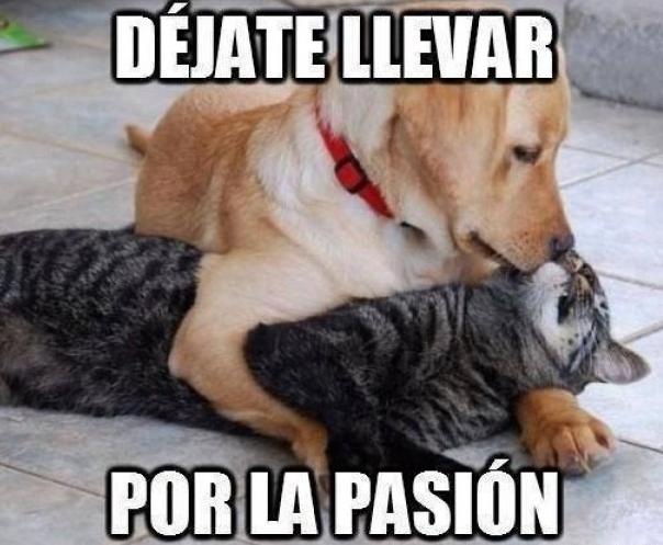 Frases Y Imagenes De Humor Déjate Llevar Por La Pasión