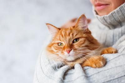 lady hugging cat