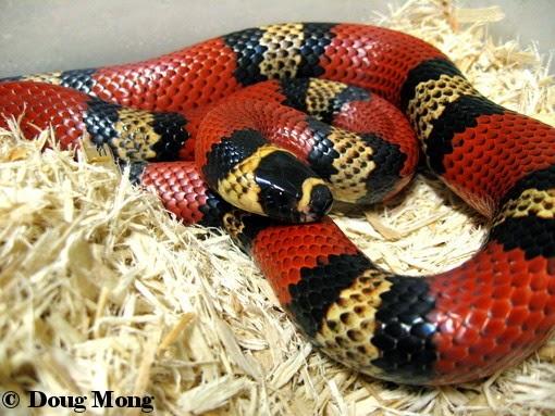 5 Most Beautiful Snakes | Fun Animals Wiki, Videos ...