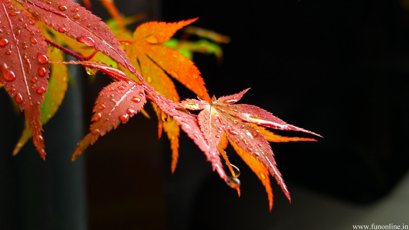 Autumn Falling Leaves Live Wallpaper Beautiful Wallpapers Rainfall Wallpaper