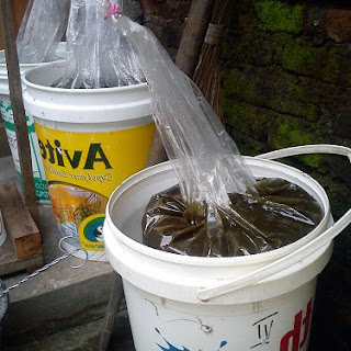 cara membuat pupuk organik cair menggunakan limbah rumah tangga